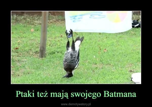 Ptaki też mają swojego Batmana –