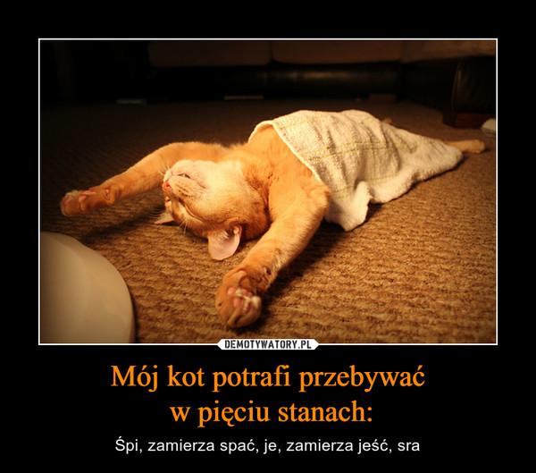 Mój kot potrafi przebywać w pięciu stanach: – Śpi, zamierza spać, je, zamierza jeść, sra