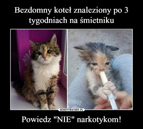 """Bezdomny koteł znaleziony po 3 tygodniach na śmietniku Powiedz """"NIE"""" narkotykom!"""