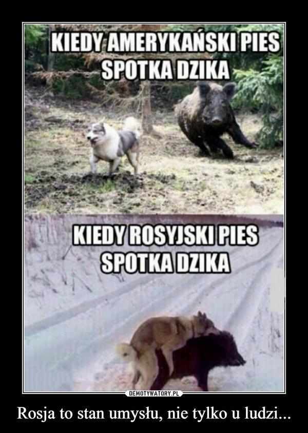 Rosja to stan umysłu, nie tylko u ludzi... –  Kiedy amerykański pies spotyka dzika kiedy rosyjski pies spotyka dzika
