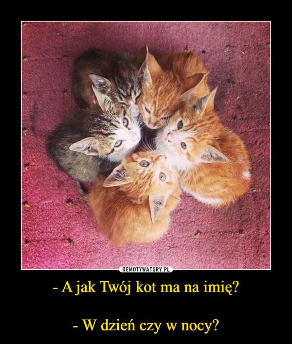- A jak Twój kot ma na imię?- W dzień czy w nocy? –