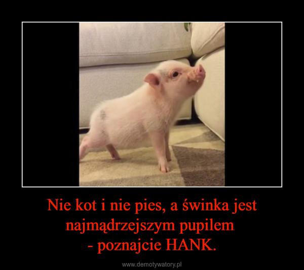 Nie kot i nie pies, a świnka jest najmądrzejszym pupilem - poznajcie HANK. –
