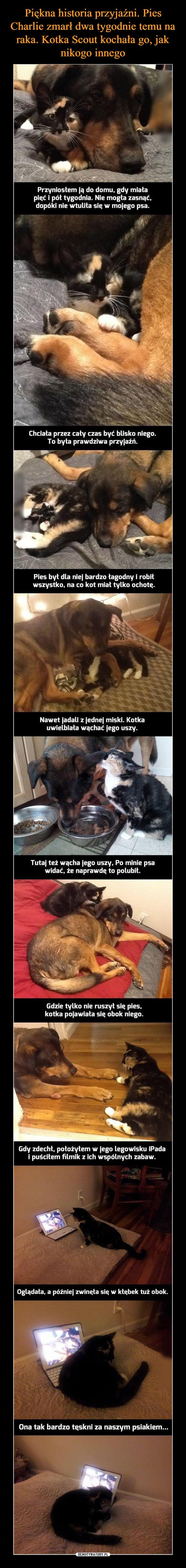 –  Chciała przez cały czas być blisko niego. To była prawdziwa przyjaźń. Pies był dla niej bardzo łagodny i robił wszystko, na co kot miał tylko ochotą. Nawet jadali z jednej miski. Kotka uwielbiała wąchać jego uszy. Tutaj też wącha jego uszy, Po minie psa widać, że naprawdę to polubił. Gdzie tylko nie ruszył sig pies, kotka pojawiała się obok niego. Gdy zdechł, położyłem w jego legowisku iPada i puściłem filmik z ich wspólnych zabaw. Oglądała, a później zwinęła się w kłębek tuż obok. Ona tak bardzo tęskni za naszym psiakiem...