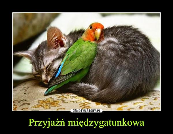 Przyjaźń międzygatunkowa –