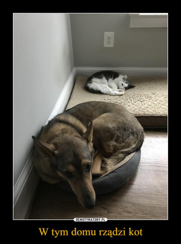 W tym domu rządzi kot –