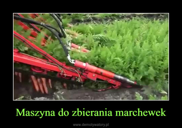 Maszyna do zbierania marchewek –