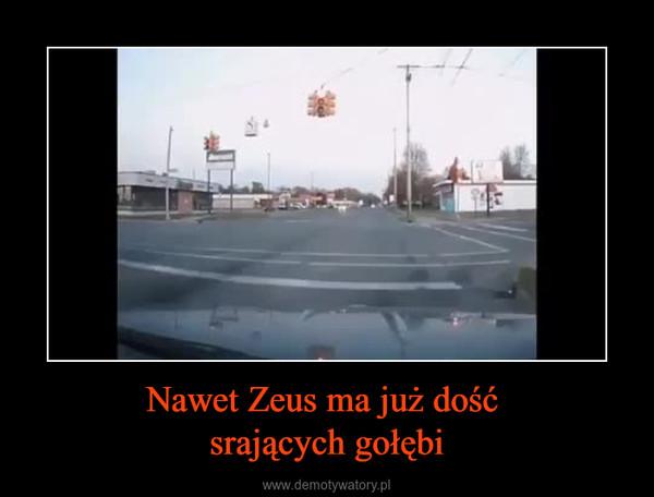Nawet Zeus ma już dość srających gołębi –