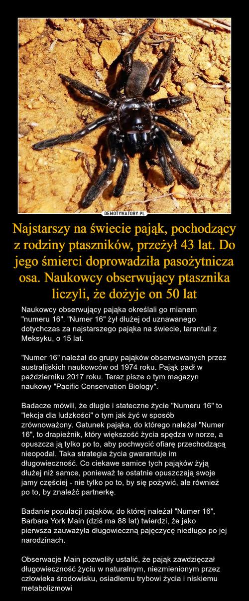 Najstarszy na świecie pająk, pochodzący z rodziny ptaszników, przeżył 43 lat. Do jego śmierci doprowadziła pasożytnicza osa. Naukowcy obserwujący ptasznika liczyli, że dożyje on 50 lat