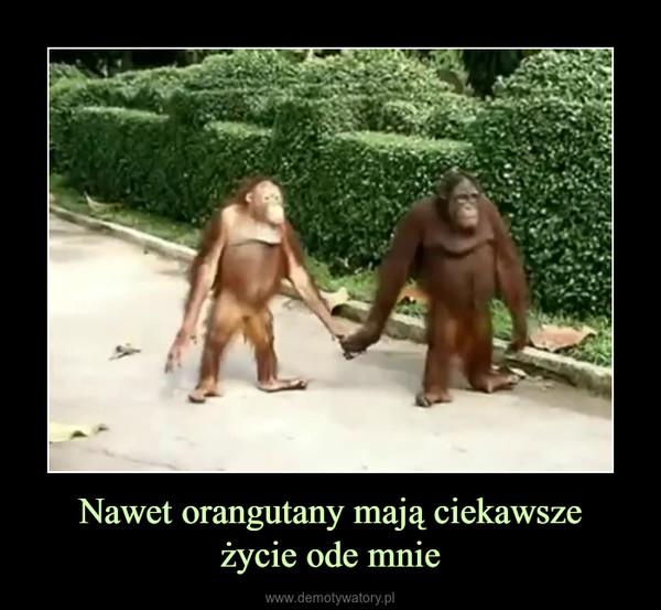 Nawet orangutany mają ciekawszeżycie ode mnie –