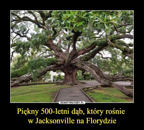 Piękny 500-letni dąb, który rośnie w Jacksonville na Florydzie –