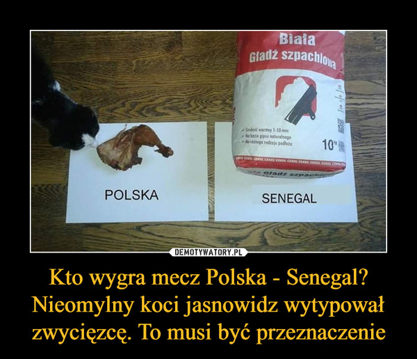 Kto wygra mecz Polska - Senegal? Nieomylny koci jasnowidz wytypował zwycięzcę. To musi być przeznaczenie –