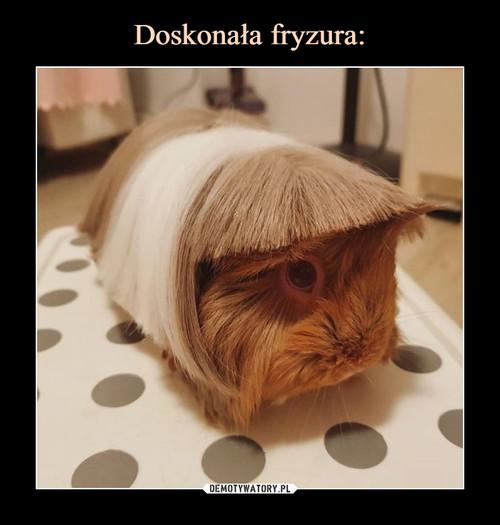 Doskonała fryzura:
