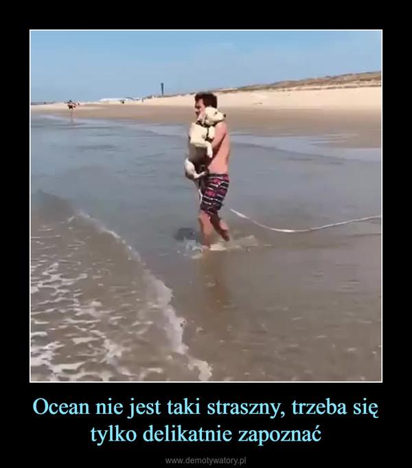 Ocean nie jest taki straszny, trzeba się tylko delikatnie zapoznać –