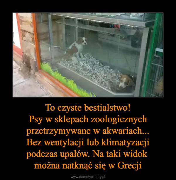 To czyste bestialstwo!Psy w sklepach zoologicznychprzetrzymywane w akwariach...Bez wentylacji lub klimatyzacjipodczas upałów. Na taki widok można natknąć się w Grecji –