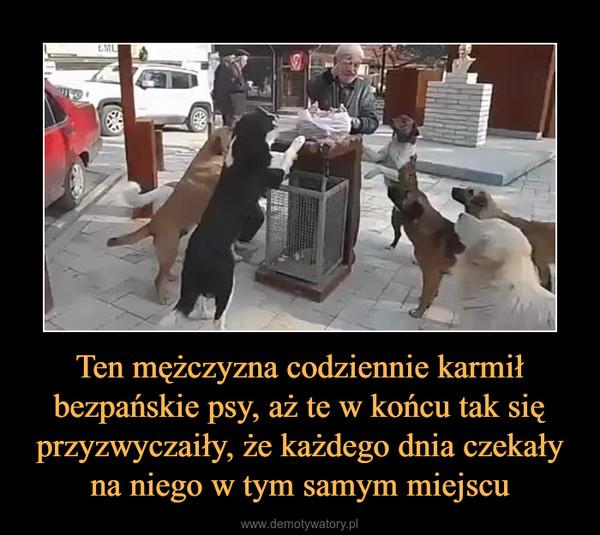 Ten mężczyzna codziennie karmił bezpańskie psy, aż te w końcu tak się przyzwyczaiły, że każdego dnia czekały na niego w tym samym miejscu –