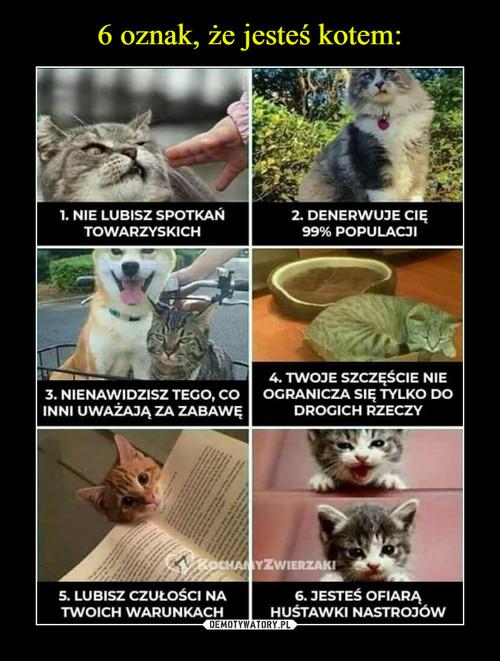 6 oznak, że jesteś kotem: