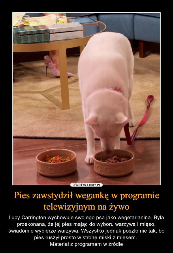 Pies zawstydził wegankę w programie telewizyjnym na żywo – Lucy Carrington wychowuje swojego psa jako wegetarianina. Była przekonana, że jej pies mając do wyboru warzywa i mięso, świadomie wybierze warzywa. Wszystko jednak poszło nie tak, bo pies ruszył prosto w stronę miski z mięsem. Materiał z programem w źródle