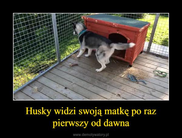 Husky widzi swoją matkę po raz pierwszy od dawna –