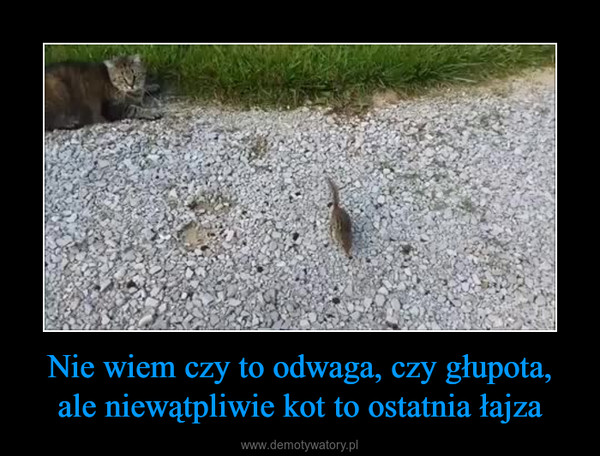 Nie wiem czy to odwaga, czy głupota, ale niewątpliwie kot to ostatnia łajza –
