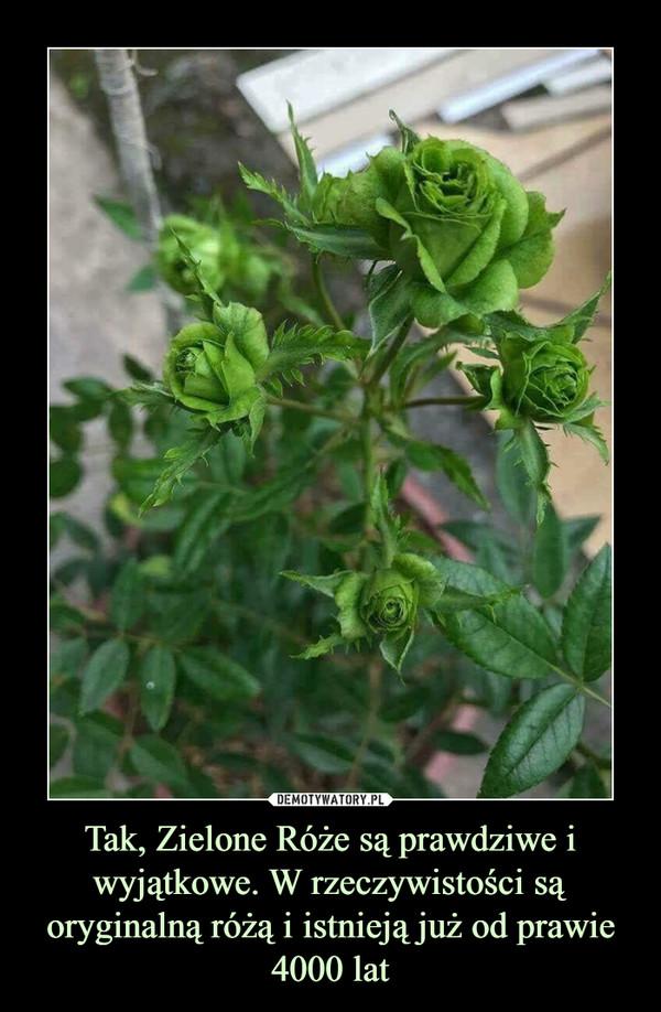 Tak, Zielone Róże są prawdziwe i wyjątkowe. W rzeczywistości są oryginalną różą i istnieją już od prawie 4000 lat –