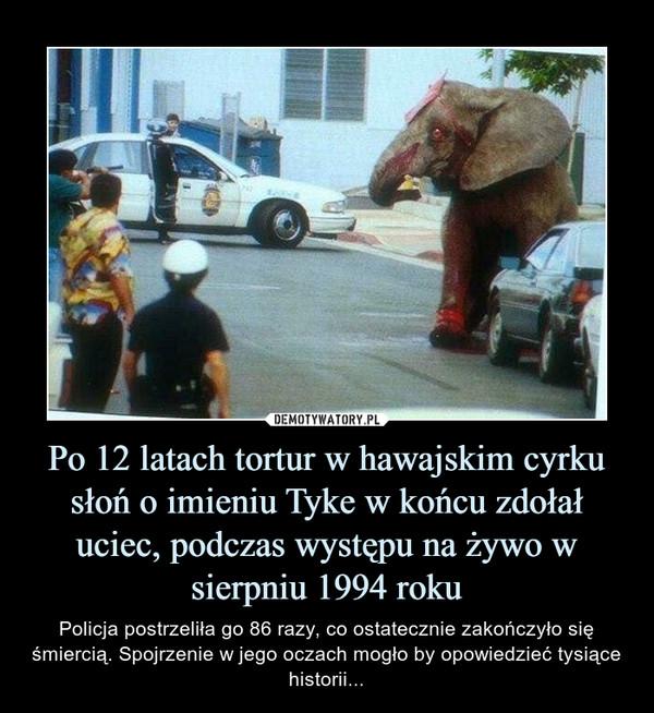 Po 12 latach tortur w hawajskim cyrku słoń o imieniu Tyke w końcu zdołał uciec, podczas występu na żywo w sierpniu 1994 roku – Policja postrzeliła go 86 razy, co ostatecznie zakończyło się śmiercią. Spojrzenie w jego oczach mogło by opowiedzieć tysiące historii...