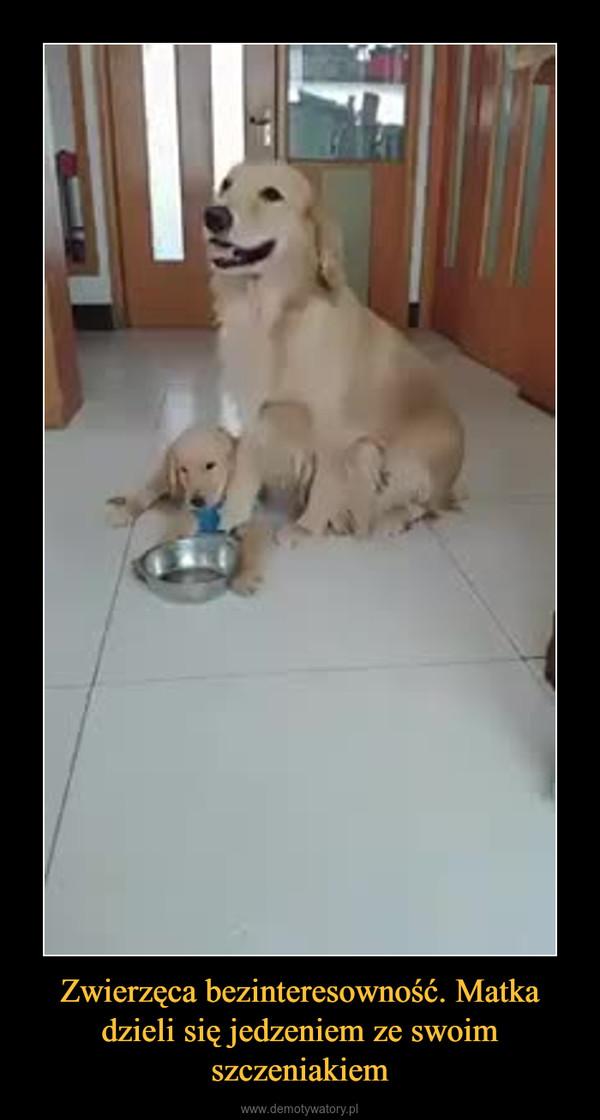 Zwierzęca bezinteresowność. Matka dzieli się jedzeniem ze swoim szczeniakiem –