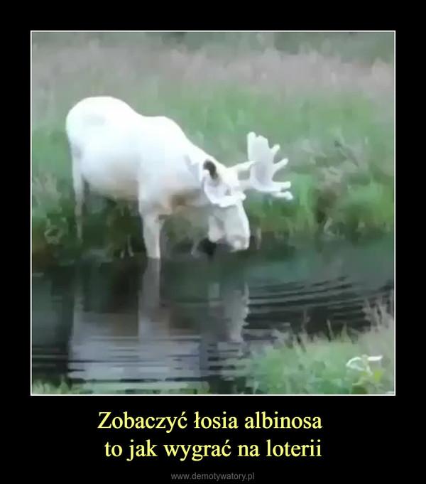 Zobaczyć łosia albinosa to jak wygrać na loterii –