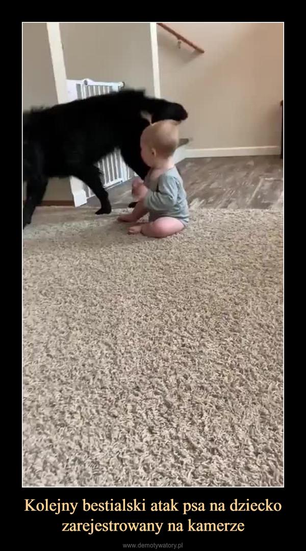 Kolejny bestialski atak psa na dziecko zarejestrowany na kamerze –