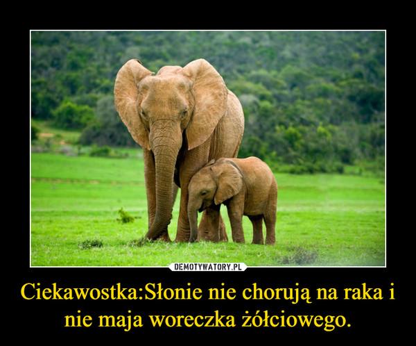 Ciekawostka:Słonie nie chorują na raka i nie maja woreczka żółciowego. –