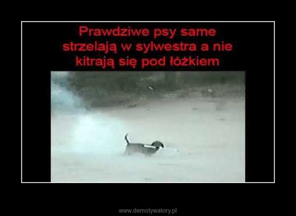 Prawdziwy pies na sylwestra nie boi się petard :D –