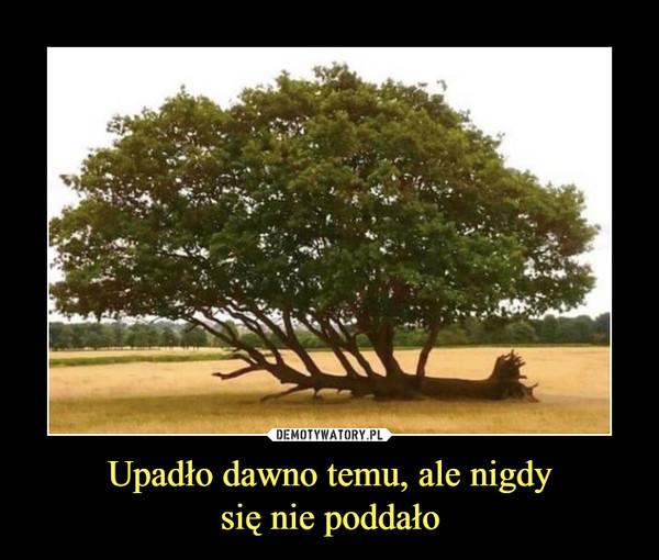 Upadło dawno temu, ale nigdysię nie poddało –