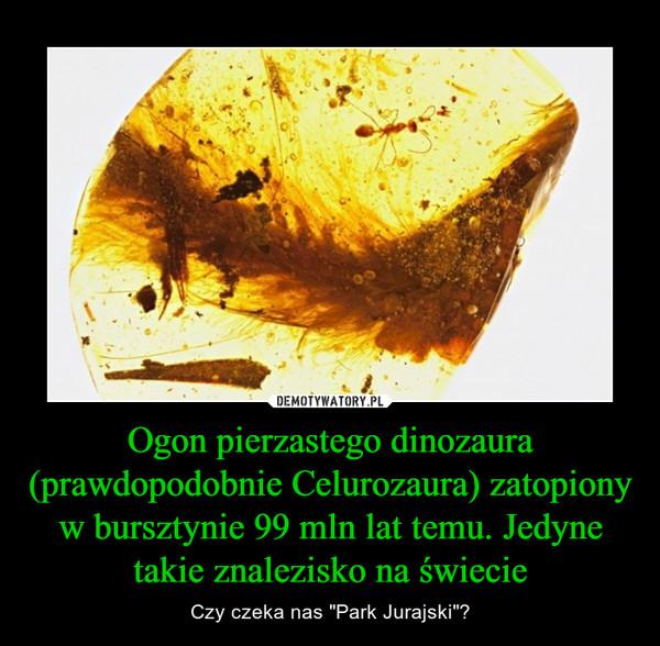 """Ogon pierzastego dinozaura (prawdopodobnie Celurozaura) zatopiony w bursztynie 99 mln lat temu. Jedyne takie znalezisko na świecie – Czy czeka nas """"Park Jurajski""""?"""