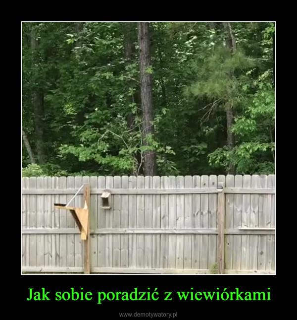 Jak sobie poradzić z wiewiórkami –