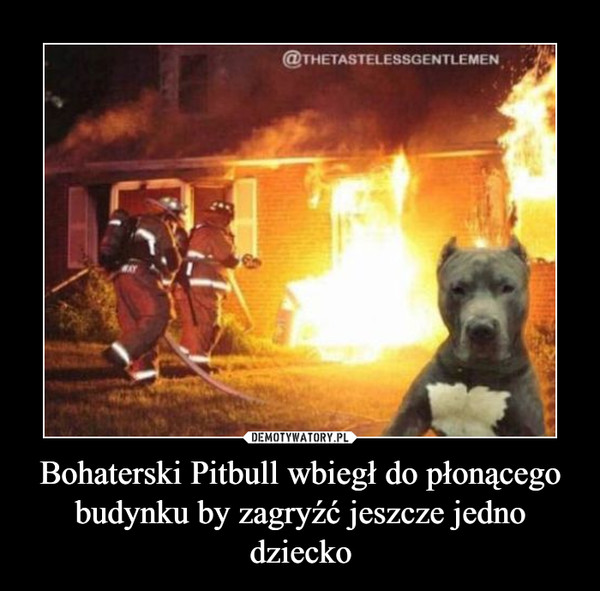 Bohaterski Pitbull wbiegł do płonącego budynku by zagryźć jeszcze jedno dziecko –