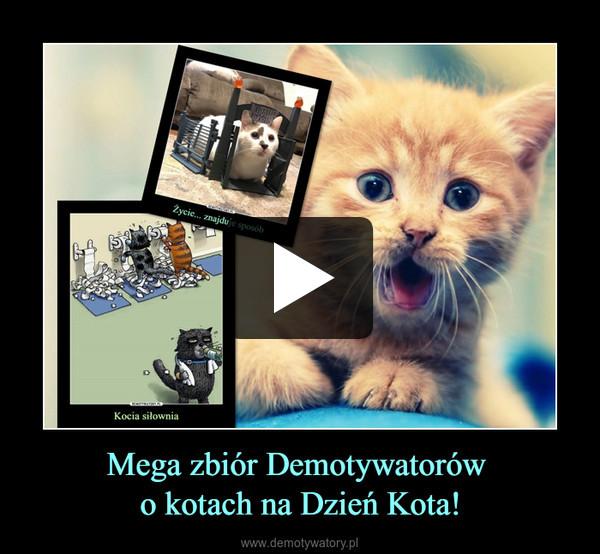 Mega zbiór Demotywatorów o kotach na Dzień Kota! –