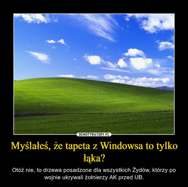 Myślałeś, że tapeta z Windowsa to tylko łąka? – Otóż nie, to drzewa posadzone dla wszystkich Żydów, którzy po wojnie ukrywali żołnierzy AK przed UB.