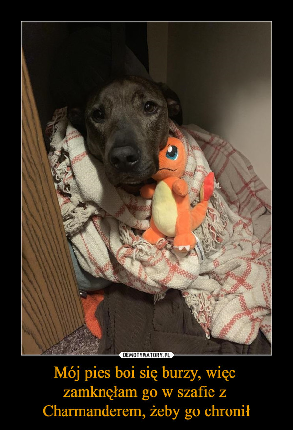 Mój pies boi się burzy, więc zamknęłam go w szafie z Charmanderem, żeby go chronił –