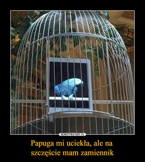 Papuga mi uciekła, ale na szczęście mam zamiennik –