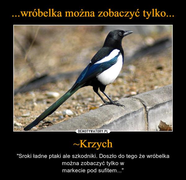 """~Krzych – """"Sroki ładne ptaki ale szkodniki. Doszło do tego że wróbelka można zobaczyć tylko wmarkecie pod sufitem..."""""""