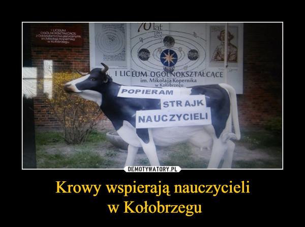 Krowy wspierają nauczycieli w Kołobrzegu –  POPIERAM STRAJK NAUCZYCIELI