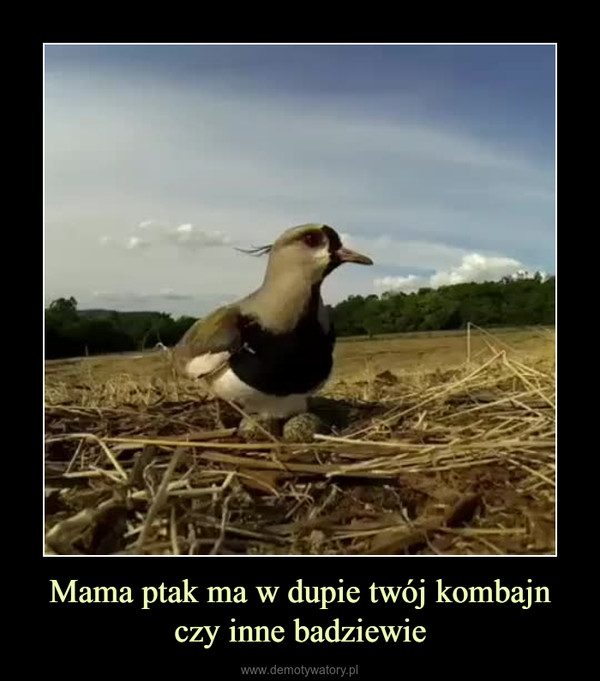 Mama ptak ma w dupie twój kombajn czy inne badziewie –