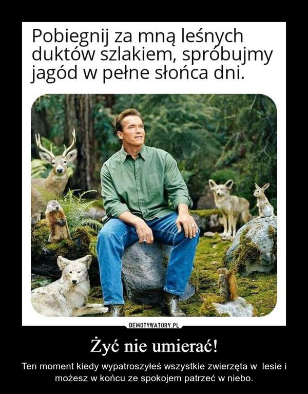 Żyć nie umierać! – Ten moment kiedy wypatroszyłeś wszystkie zwierzęta w  lesie i możesz w końcu ze spokojem patrzeć w niebo.