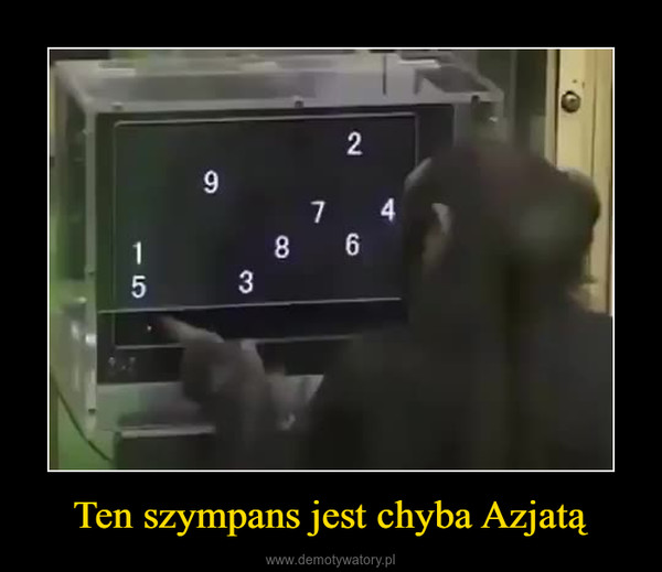 Ten szympans jest chyba Azjatą –