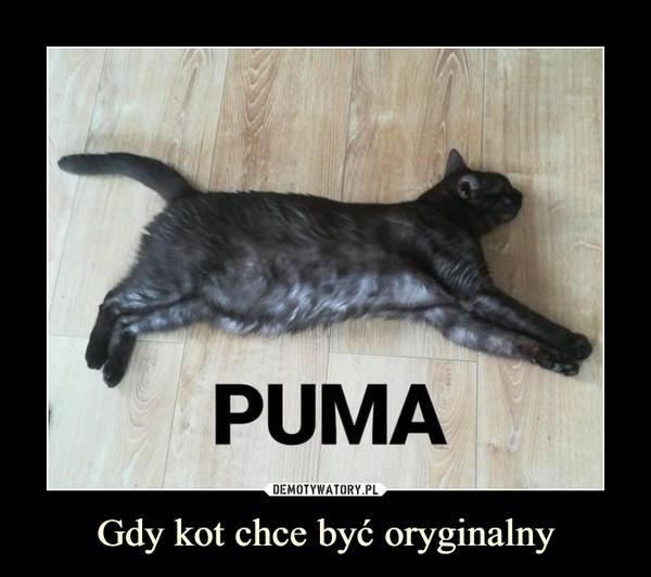 Gdy kot chce być oryginalny –