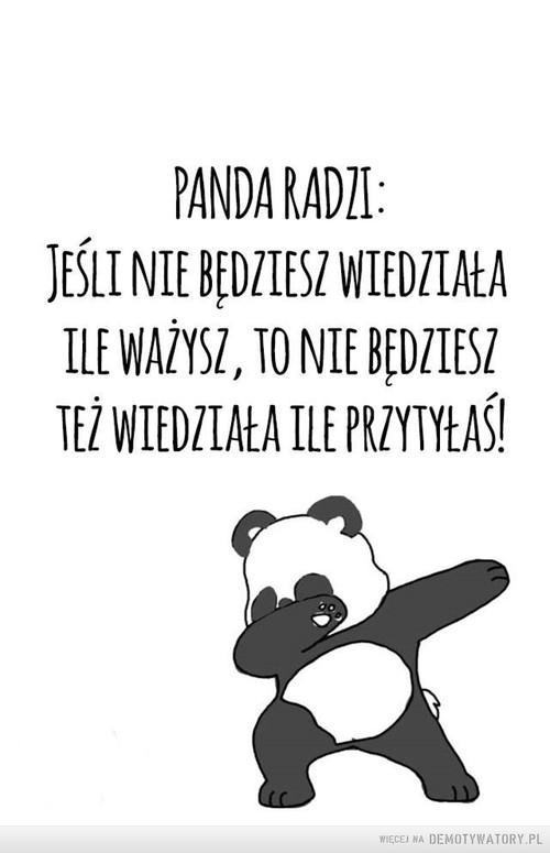 Mądra panda