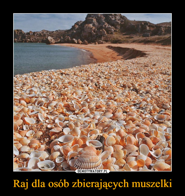 Raj dla osób zbierających muszelki –