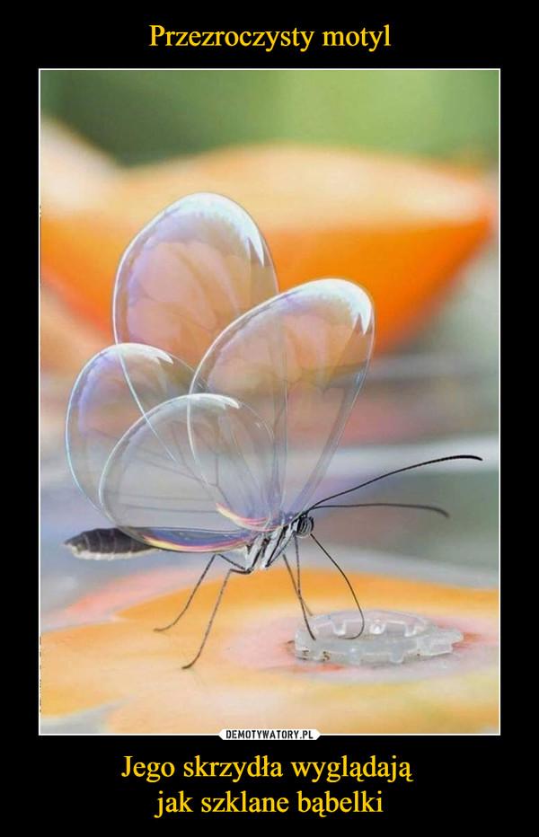 Jego skrzydła wyglądają jak szklane bąbelki –