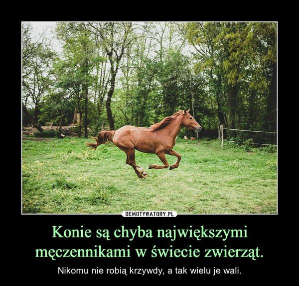 Konie są chyba największymi męczennikami w świecie zwierząt. – Nikomu nie robią krzywdy, a tak wielu je wali.