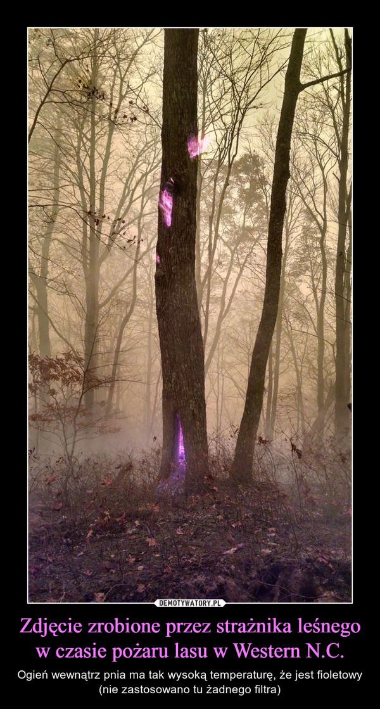 Zdjęcie zrobione przez strażnika leśnego w czasie pożaru lasu w Western N.C. – Ogień wewnątrz pnia ma tak wysoką temperaturę, że jest fioletowy (nie zastosowano tu żadnego filtra)