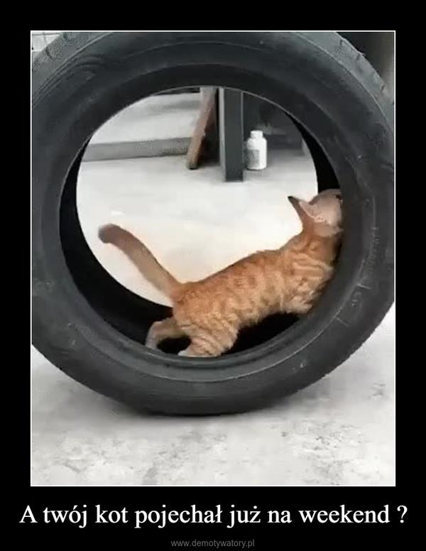 A twój kot pojechał już na weekend ? –